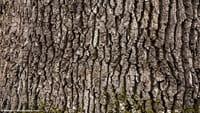 Ecosia a planté 12 millions d'arbres