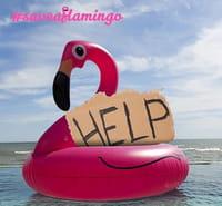 #Saveaflamingo pour sauver un flamant rose sur les réseaux sociaux