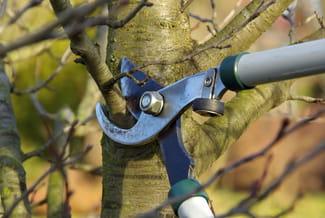 Mod le de lettre lagage de branches d 39 arbres - Article 673 code civil ...