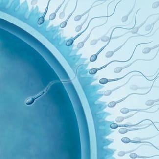 ovulation calculer sa date d 39 ovulation facilement sant m decine. Black Bedroom Furniture Sets. Home Design Ideas