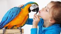 Rocco, le perroquet qui commande sur Amazon en utilisant Alexa