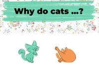 Why do cats & dogs : pourquoi les chats ont peur des concombres ?