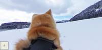 Sur Google Street View, une visite guidée du Japon avec des chiens Akita