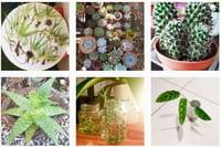 Sur le web, des communautés pour échanger ses plantes