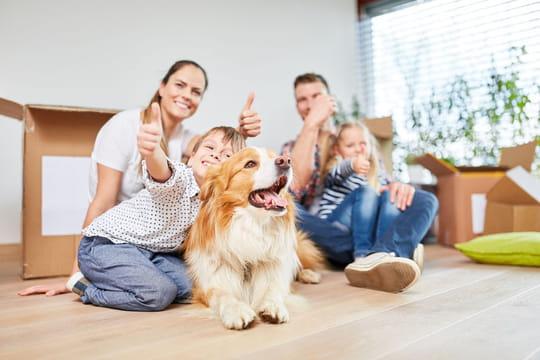 Loi sur l'interdiction des animaux dans une location