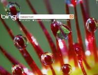 Bing affiche 5 fois plus de liens vers des sites infectés que Google