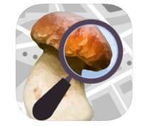 Champignouf : identifier les champignons en quelques clics