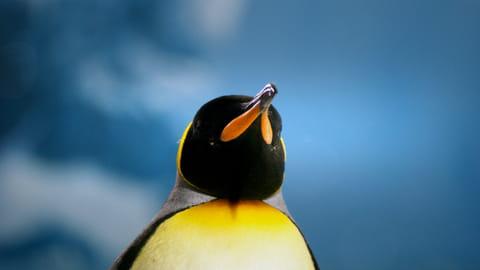Formation en ligne: découvrir et maîtriser Linux