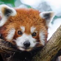 Journée mondiale des animaux : on les aime aussi sur le web !