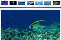 Seafootage : la banque de rushes dédiée aux images sous-marines