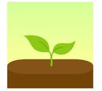 Des sites et des applis pour planter des arbres