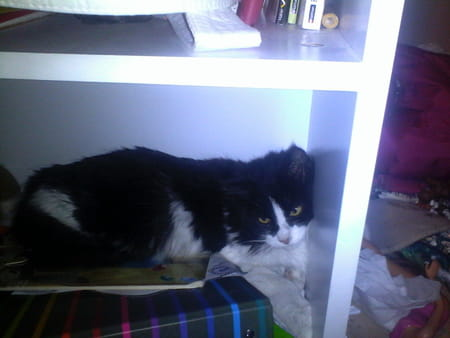 probl me jeune chatte reste dans son coin toute la journ e chats. Black Bedroom Furniture Sets. Home Design Ideas