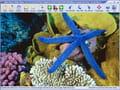 Télécharger Easy Photo Slide show (Présentation)