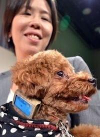 Japon : un podomètre et des services en ligne de suivi de santé pour chien